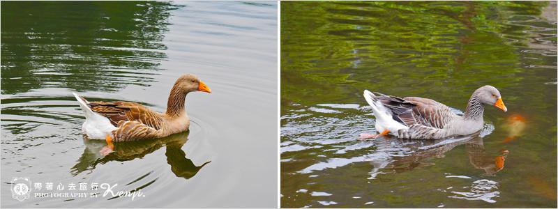 湯布院-金鱗湖-0-4.jpg