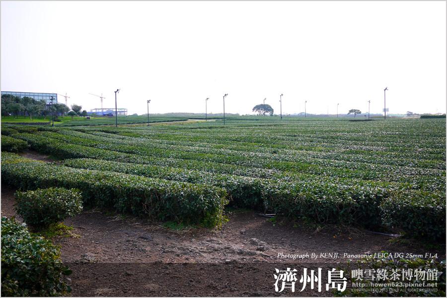噢雪綠茶博物館22